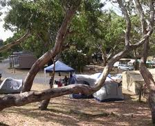 Picture of the campsite at Bimbi park. You really do get to sleep with Koalas above your head! Image from planbooktravel.com