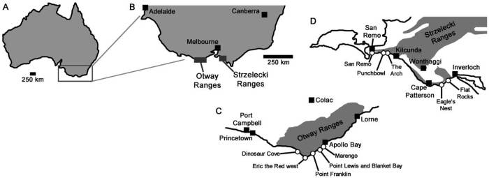 Map showing not only the Eric the Red West site and the Flat Rocks site at Inverloch, but other fossil localites from Victoria. Image from Benson et al., 2012.