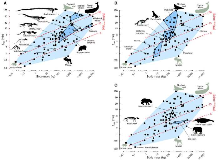 Graphs showing diving capacity in ancestral whales, seals, and sea cows. Image from Mirceta et al. 2013.