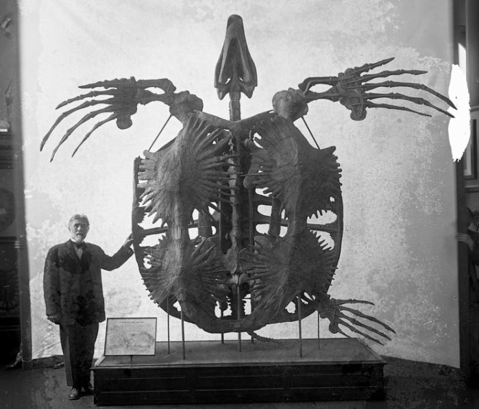 Here you can clearly see just how huge the largest known fossil turtle, Archelon, really was. Image from Moody et al. 2013.