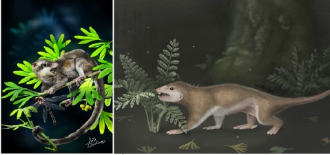Artists reconstructions of Arboroharamiya (l) and Megaconus (r). Art by Zhao Chuang (l) & April Isch (r).